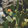 Pixelhobby pakket Cactus in bloem Pixelcraft pakket