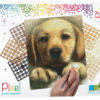 90045_Golden-retriever-puppy_4BP_EN