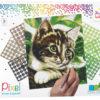 90048_Kitten_9BP_EN