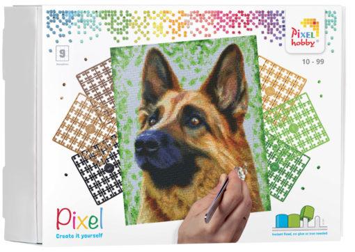 90049_Shepherd-dog_9BP_EN