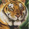 Tiger - Tijger 90043