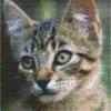 Poes - Kitten - 4 basisplaten - 90034